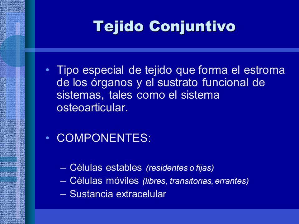 Tejido Conjuntivo Tipo especial de tejido que forma el estroma de los órganos y el sustrato funcional de sistemas, tales como el sistema osteoarticular.