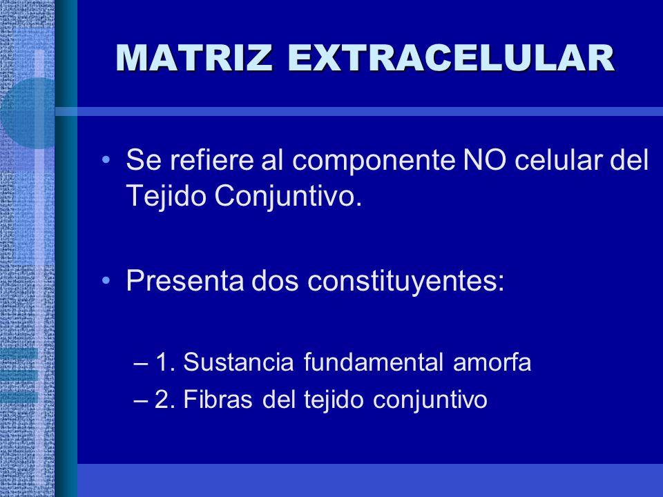 MATRIZ EXTRACELULAR Se refiere al componente NO celular del Tejido Conjuntivo.