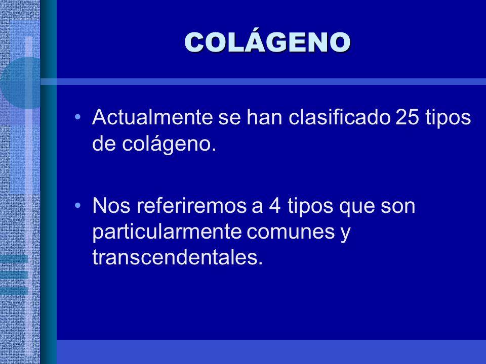 COLÁGENO Actualmente se han clasificado 25 tipos de colágeno.