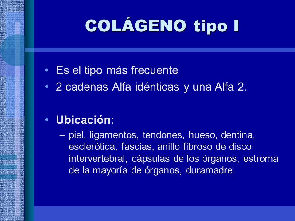 COLÁGENO tipo I Es el tipo más frecuente 2 cadenas Alfa idénticas y una Alfa 2.