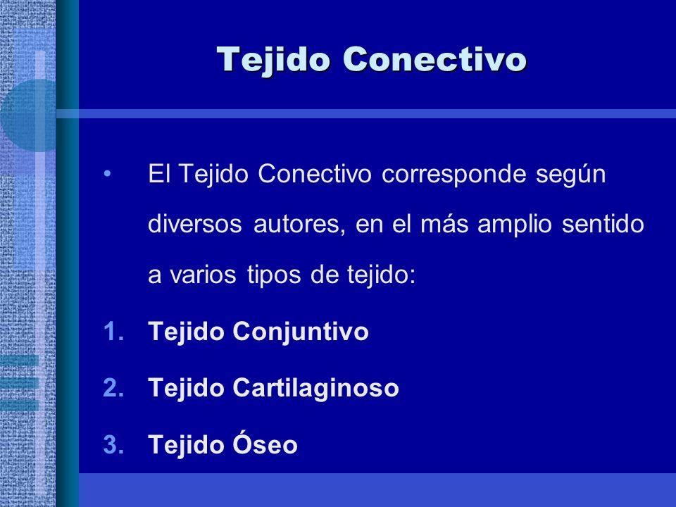 Tejido Conectivo El Tejido Conectivo corresponde según diversos autores, en el más amplio sentido a varios tipos de tejido: 1.Tejido Conjuntivo 2.Tejido Cartilaginoso 3.Tejido Óseo