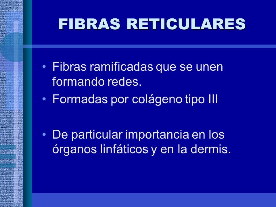 FIBRAS RETICULARES Fibras ramificadas que se unen formando redes.