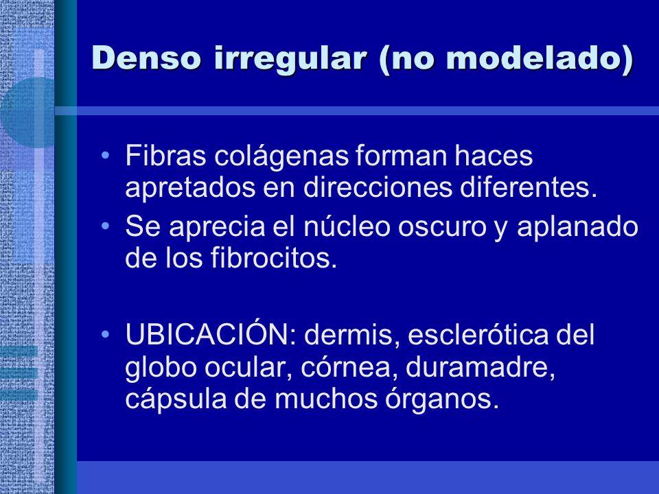 Denso irregular (no modelado) Fibras colágenas forman haces apretados en direcciones diferentes.