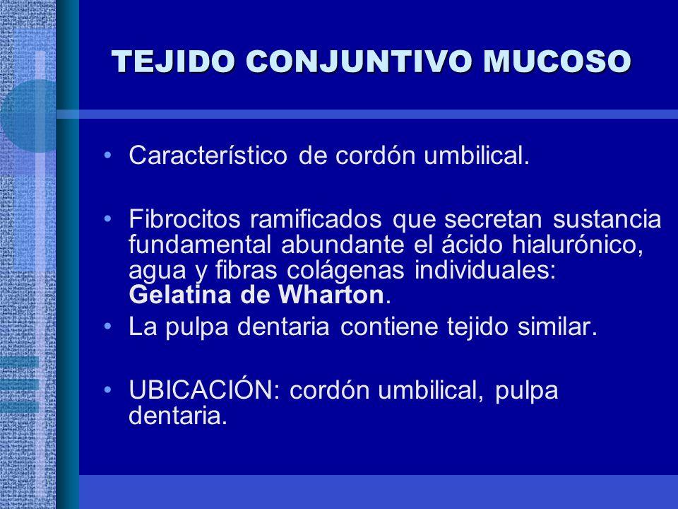 TEJIDO CONJUNTIVO MUCOSO Característico de cordón umbilical.