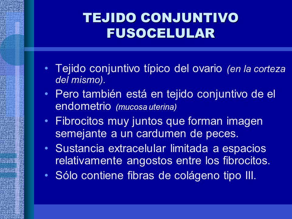 TEJIDO CONJUNTIVO FUSOCELULAR Tejido conjuntivo típico del ovario (en la corteza del mismo).