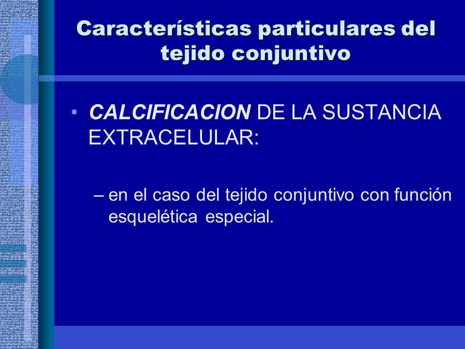 Características particulares del tejido conjuntivo CALCIFICACION DE LA SUSTANCIA EXTRACELULAR: –en el caso del tejido conjuntivo con función esquelética especial.