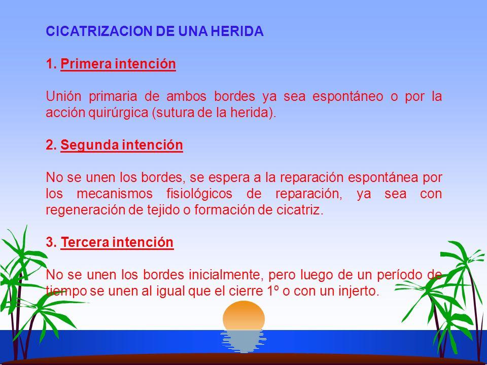 CICATRIZACION DE UNA HERIDA 1. Primera intención Unión primaria de ambos bordes ya sea espontáneo o por la acción quirúrgica (sutura de la herida). 2.
