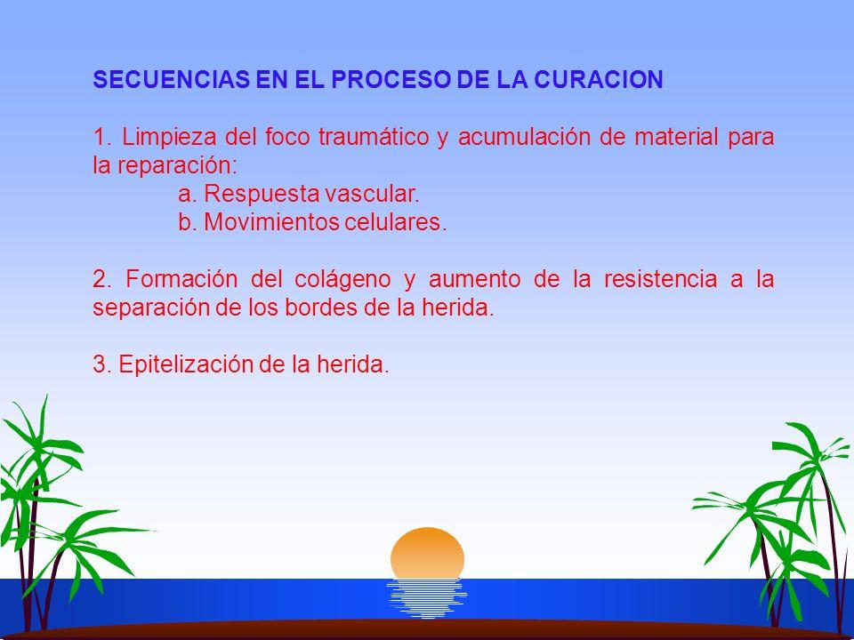SECUENCIAS EN EL PROCESO DE LA CURACION 1. Limpieza del foco traumático y acumulación de material para la reparación: a. Respuesta vascular. b. Movimi