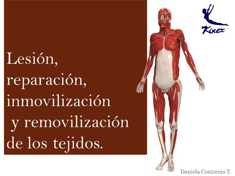 Lesión, reparación, inmovilización y removilización de los tejidos. Daniela Contreras T.