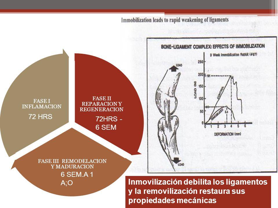 Inmovilización debilita los ligamentos y la removilización restaura sus propiedades mecánicas FASE II REPARACION Y REGENERACION FASE III REMODELACION Y MADURACION FASE I INFLAMACION 72 HRS 72HRS - 6 SEM 6 SEM.A 1 A;O