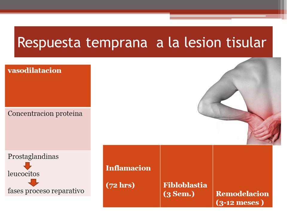 Respuesta temprana a la lesion tisular Inflamacion (72 hrs)Fibloblastia (3 Sem.)Remodelacion (3-12 meses ) vasodilatacion Concentracion proteina Prostaglandinas leucocitos fases proceso reparativo