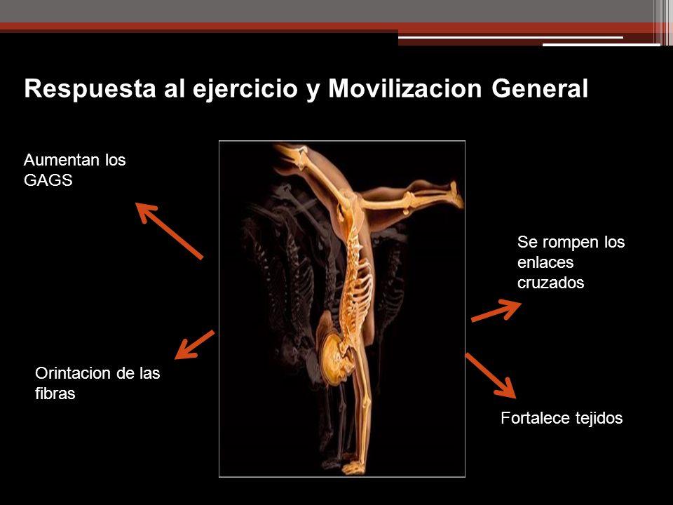 Respuesta al ejercicio y Movilizacion General Aumentan los GAGS Se rompen los enlaces cruzados Orintacion de las fibras Fortalece tejidos