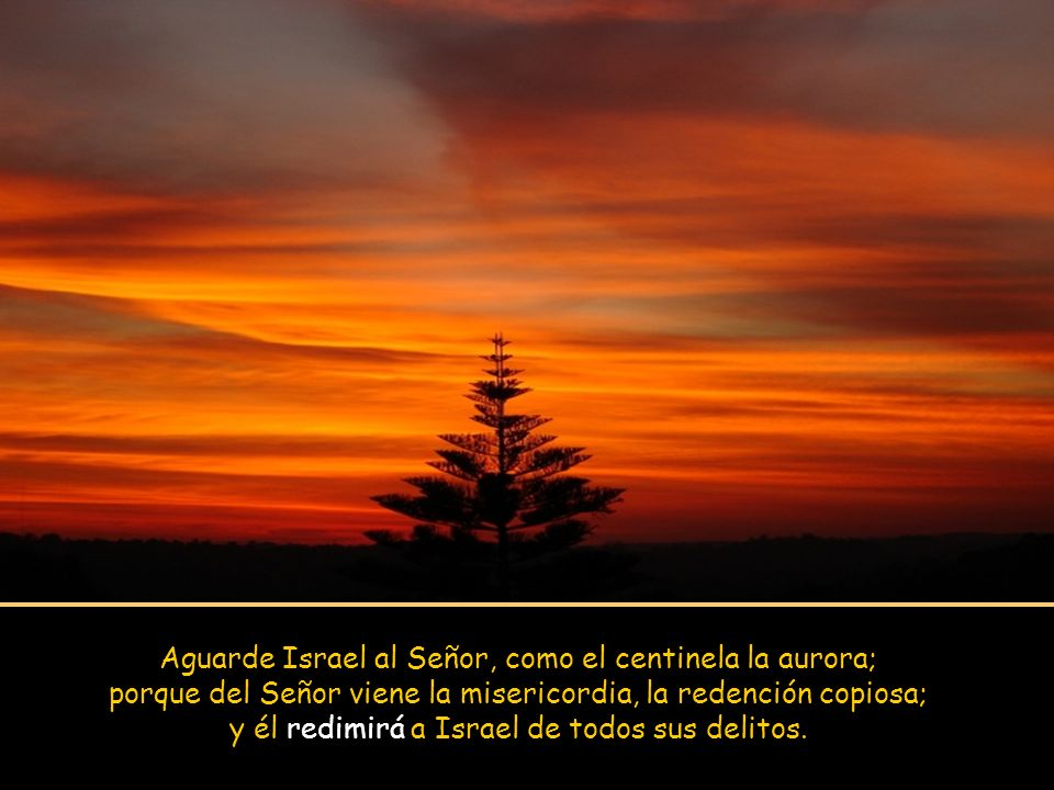 Aguarde Israel al Señor, como el centinela la aurora; porque del Señor viene la misericordia, la redención copiosa; y él redimirá a Israel de todos sus delitos.