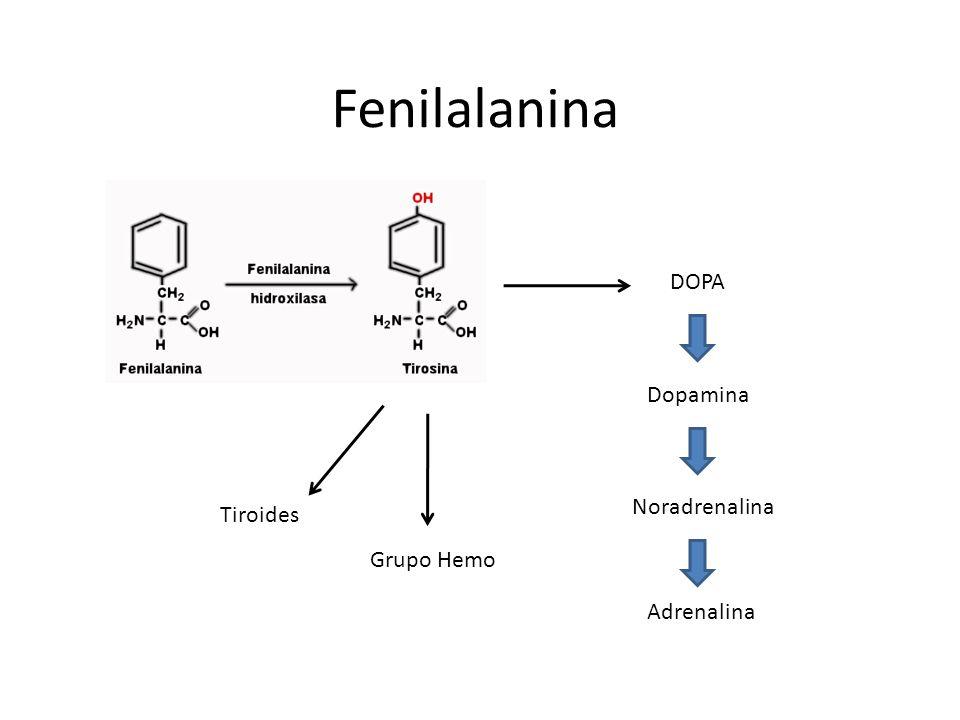 Fenilalanina DOPA Dopamina Noradrenalina Adrenalina Tiroides Grupo Hemo