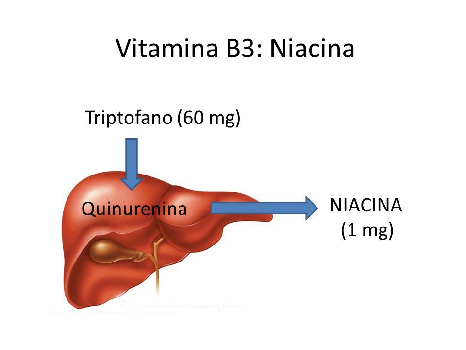 Vitamina B3: Niacina Triptofano (60 mg) NIACINA (1 mg) Quinurenina