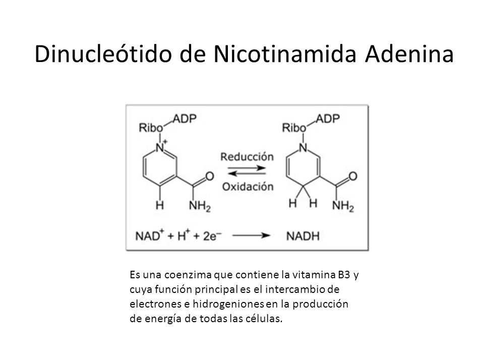 Dinucleótido de Nicotinamida Adenina Es una coenzima que contiene la vitamina B3 y cuya función principal es el intercambio de electrones e hidrogenio