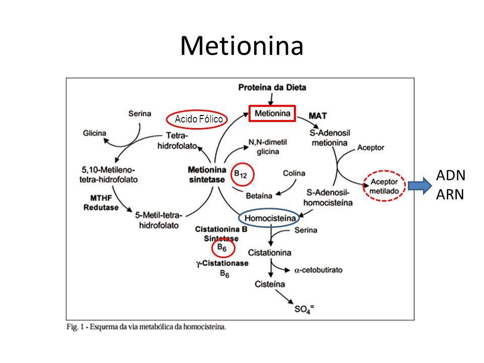Metionina Acido Fólico ADN ARN