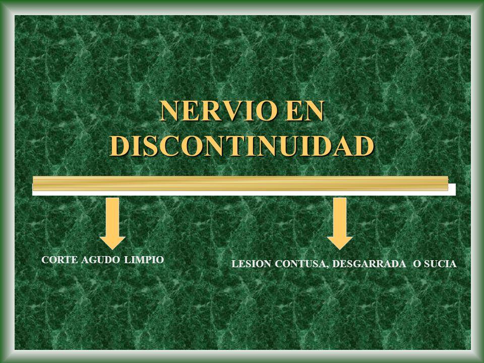 NERVIO EN DISCONTINUIDAD CORTE AGUDO LIMPIO LESION CONTUSA, DESGARRADA O SUCIA