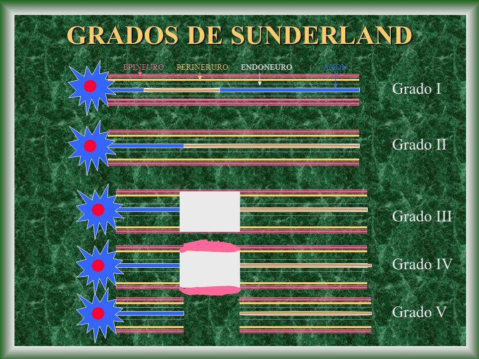 GRADOS DE SUNDERLAND Grado I Grado II Grado III Grado IV Grado V EPINEUROPERINERUROENDONEUROAXON