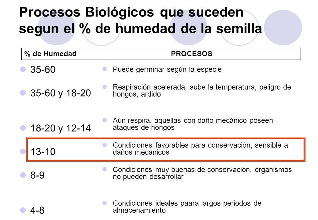 Procesos Biológicos que suceden segun el % de humedad de la semilla 35-60 35-60 y 18-20 18-20 y 12-14 13-10 8-9 4-8 Puede germinar según la especie Respiración acelerada, sube la temperatura, peligro de hongos, ardido Aún respira, aquellas con daño mecánico poseen ataques de hongos Condiciones favorables para conservación, sensible a daños mecánicos Condiciones muy buenas de conservación, organismos no pueden desarrollar Condiciones ideales paara largos periodos de almacenamiento % de HumedadPROCESOS