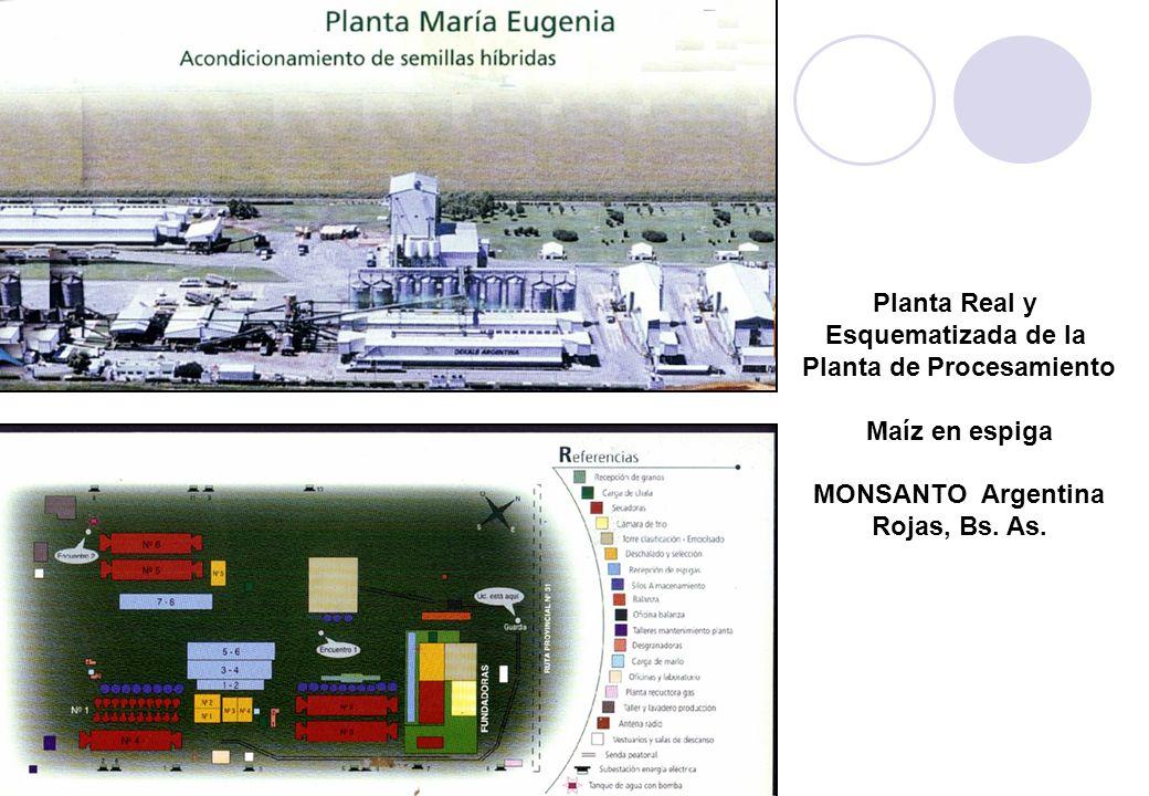 Planta Real y Esquematizada de la Planta de Procesamiento Maíz en espiga MONSANTO Argentina Rojas, Bs.