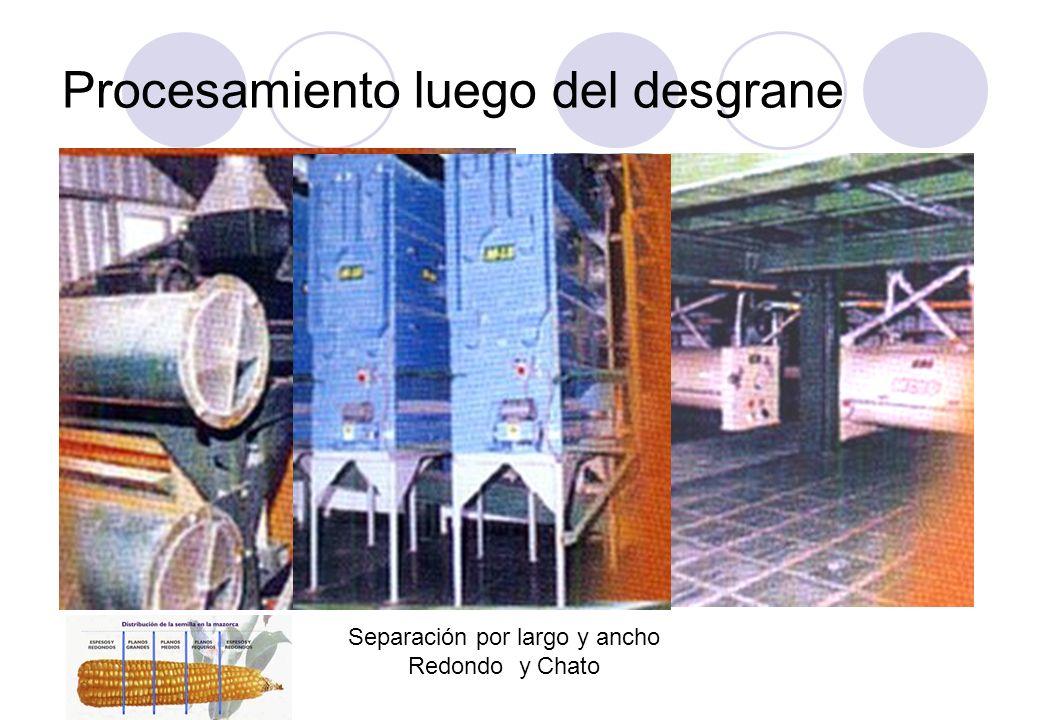 Procesamiento luego del desgrane Separación por largo y ancho Redondo y Chato
