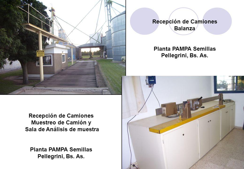 Recepción de Camiones Balanza Planta PAMPA Semillas Pellegrini, Bs.