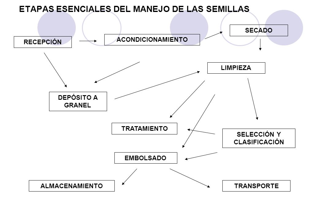 ETAPAS ESENCIALES DEL MANEJO DE LAS SEMILLAS SECADO ALMACENAMIENTOTRANSPORTE EMBOLSADO TRATAMIENTO DEPÓSITO A GRANEL SELECCIÓN Y CLASIFICACIÓN LIMPIEZA ACONDICIONAMIENTO RECEPCIÓN