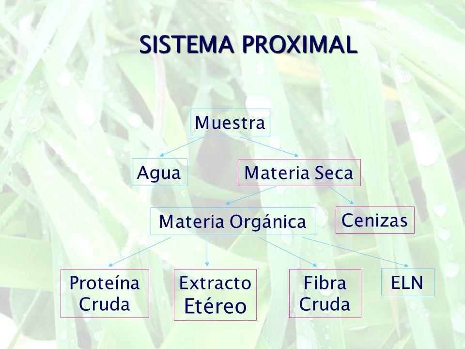 SISTEMA PROXIMAL Muestra Agua Materia Seca Cenizas Materia Orgánica Extracto Etéreo Proteína Cruda Fibra Cruda ELN