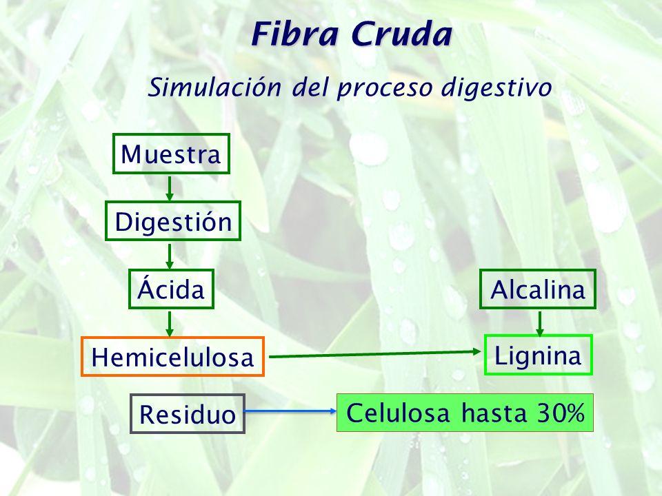 Fibra Cruda Simulación del proceso digestivo Muestra Digestión ÁcidaAlcalina Hemicelulosa Lignina Residuo Celulosa hasta 30%