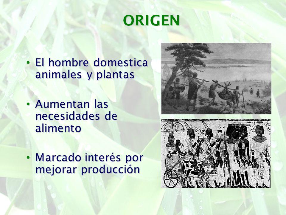 ORIGEN El hombre domestica animales y plantas El hombre domestica animales y plantas Aumentan las necesidades de alimento Aumentan las necesidades de