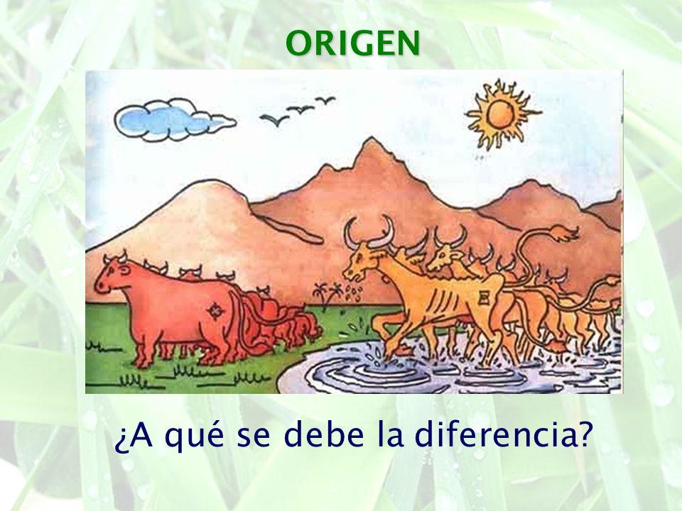 ORIGEN ¿A qué se debe la diferencia?