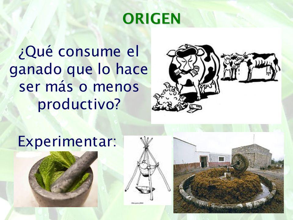 ORIGEN ¿Qué consume el ganado que lo hace ser más o menos productivo? Experimentar: