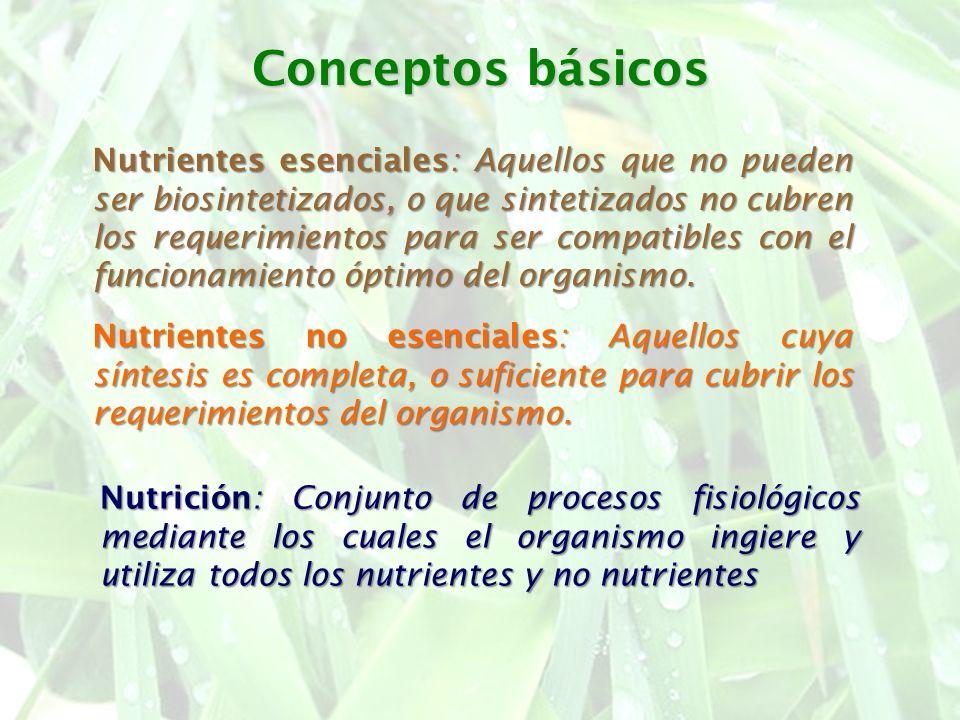 Conceptos básicos Nutrientes esenciales: Aquellos que no pueden ser biosintetizados, o que sintetizados no cubren los requerimientos para ser compatib