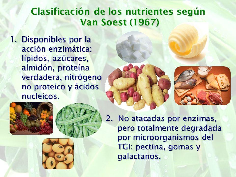 Clasificación de los nutrientes según Van Soest (1967) 1.Disponibles por la acción enzimática: lípidos, azúcares, almidón, proteína verdadera, nitróge