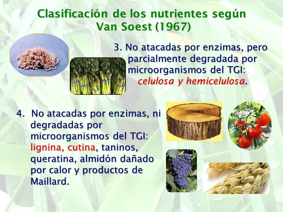 Clasificación de los nutrientes según Van Soest (1967) 3. No atacadas por enzimas, pero parcialmente degradada por microorganismos del TGI: celulosa y