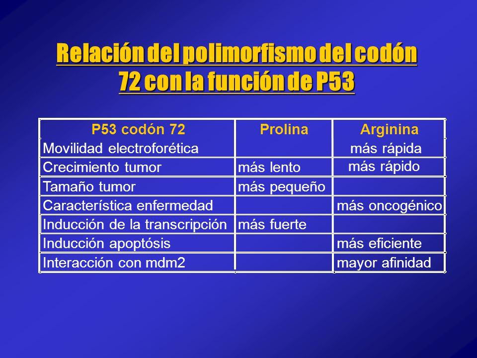 Relación del polimorfismo del codón 72 con la función de P53 P53 codón 72ProlinaArginina Movilidad electroforéticamás rápida Crecimiento tumormás lent