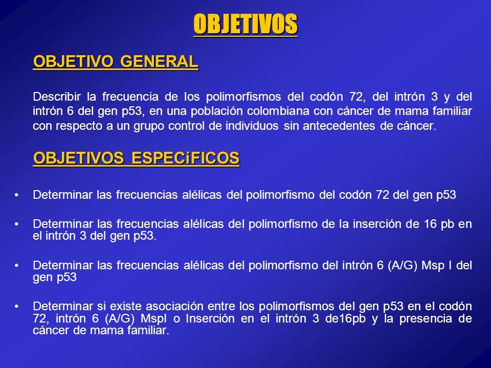 OBJETIVOS OBJETIVO GENERAL Describir la frecuencia de los polimorfismos del codón 72, del intrón 3 y del intrón 6 del gen p53, en una población colomb