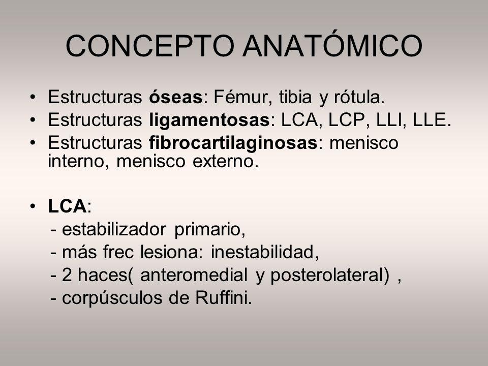 CONCEPTO ANATÓMICO Estructuras óseas: Fémur, tibia y rótula. Estructuras ligamentosas: LCA, LCP, LLI, LLE. Estructuras fibrocartilaginosas: menisco in
