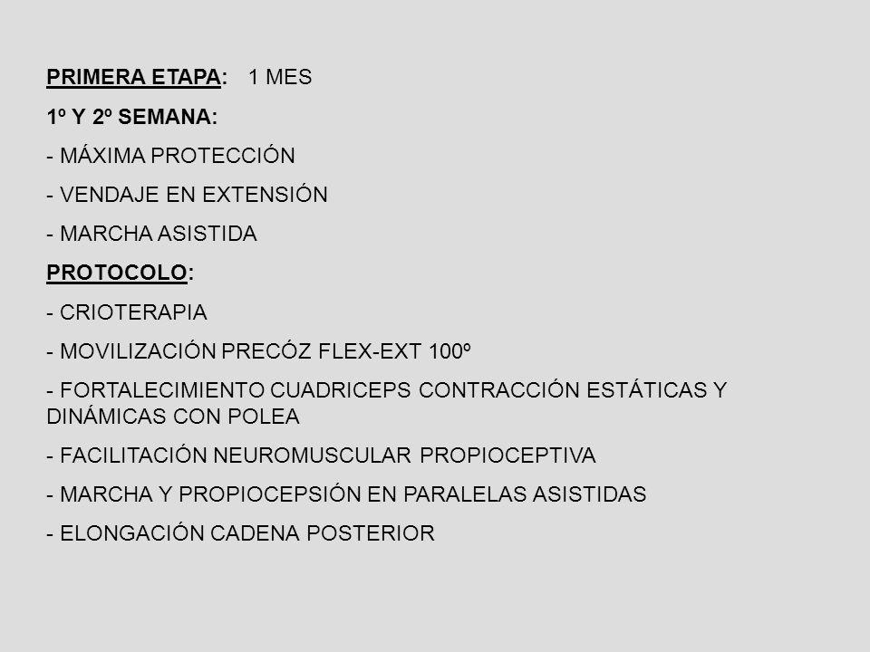 PRIMERA ETAPA: 1 MES 1º Y 2º SEMANA: - MÁXIMA PROTECCIÓN - VENDAJE EN EXTENSIÓN - MARCHA ASISTIDA PROTOCOLO: - CRIOTERAPIA - MOVILIZACIÓN PRECÓZ FLEX-EXT 100º - FORTALECIMIENTO CUADRICEPS CONTRACCIÓN ESTÁTICAS Y DINÁMICAS CON POLEA - FACILITACIÓN NEUROMUSCULAR PROPIOCEPTIVA - MARCHA Y PROPIOCEPSIÓN EN PARALELAS ASISTIDAS - ELONGACIÓN CADENA POSTERIOR