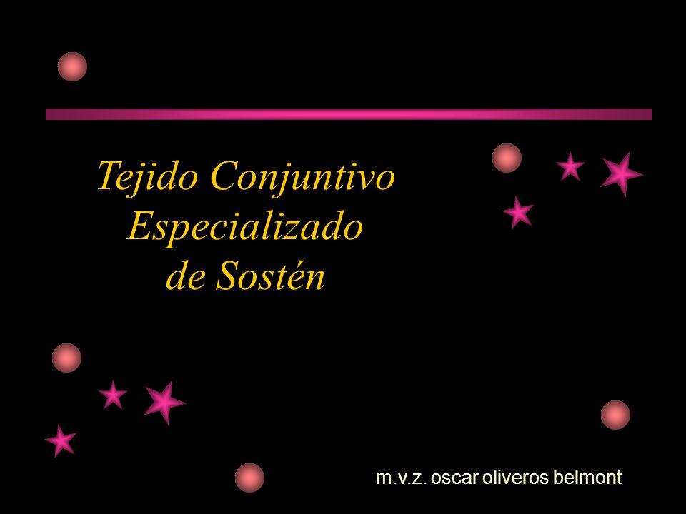 m.v.z. oscar oliveros belmont Tejido Conjuntivo Especializado de Sostén