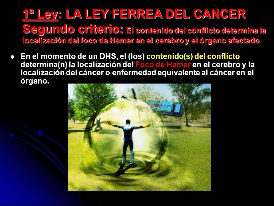 1ª Ley: LA LEY FERREA DEL CANCER Segundo criterio: El contenido del conflicto determina la localización del foco de Hamer en el cerebro y el órgano afectado En el momento de un DHS, el (los) contenido(s) del conflicto determina(n) la localización del Foco de Hamer en el cerebro y la localización del cáncer o enfermedad equivalente al cáncer en el órgano.