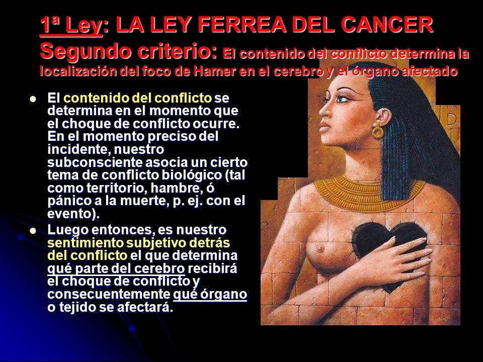 1ª Ley: LA LEY FERREA DEL CANCER Segundo criterio: El contenido del conflicto determina la localización del foco de Hamer en el cerebro y el órgano afectado El se determina en el momento que el choque de conflicto ocurre.
