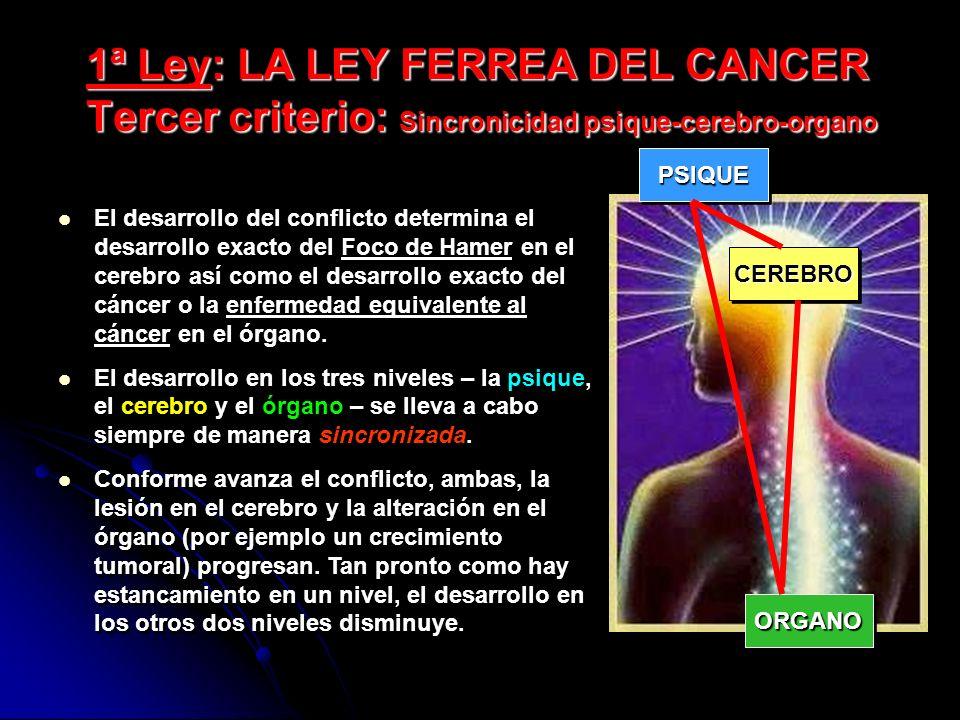 1ª Ley: LA LEY FERREA DEL CANCER Tercer criterio: Sincronicidad psique-cerebro-organo El desarrollo del conflicto determina el desarrollo exacto del Foco de Hamer en el cerebro así como el desarrollo exacto del cáncer o la enfermedad equivalente al cáncer en el órgano.