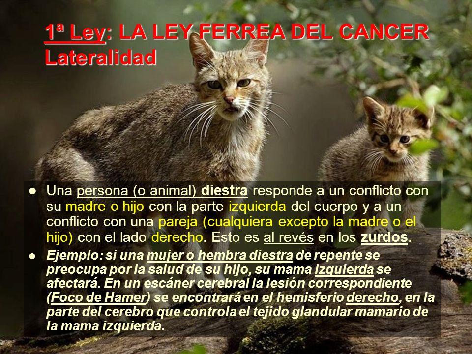1ª Ley: LA LEY FERREA DEL CANCER Lateralidad Una persona (o animal) diestra responde a un conflicto con su madre o hijo con la parte izquierda del cuerpo y a un conflicto con una pareja (cualquiera excepto la madre o el hijo) con el lado derecho.