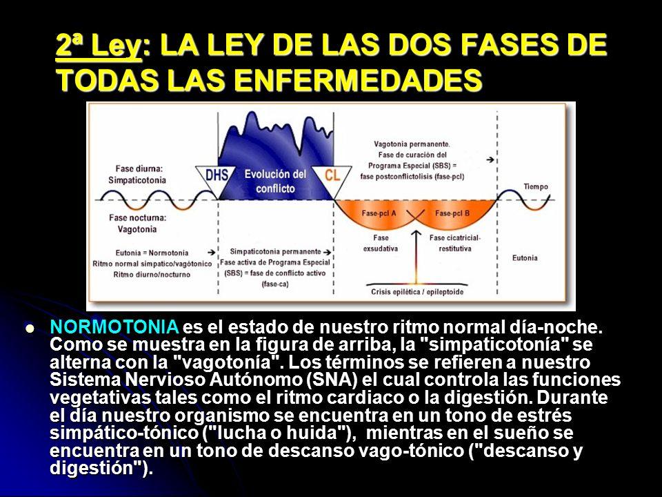 2ª Ley: LA LEY DE LAS DOS FASES DE TODAS LAS ENFERMEDADES NORMOTONIA es el estado de nuestro ritmo normal día-noche. Como se muestra en la figura de a
