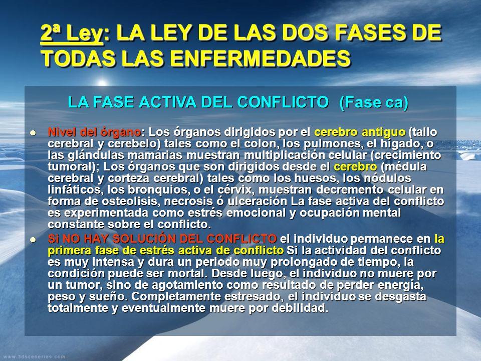 2ª Ley: LA LEY DE LAS DOS FASES DE TODAS LAS ENFERMEDADES Nivel del órgano: Los órganos dirigidos por el cerebro antiguo (tallo cerebral y cerebelo) t