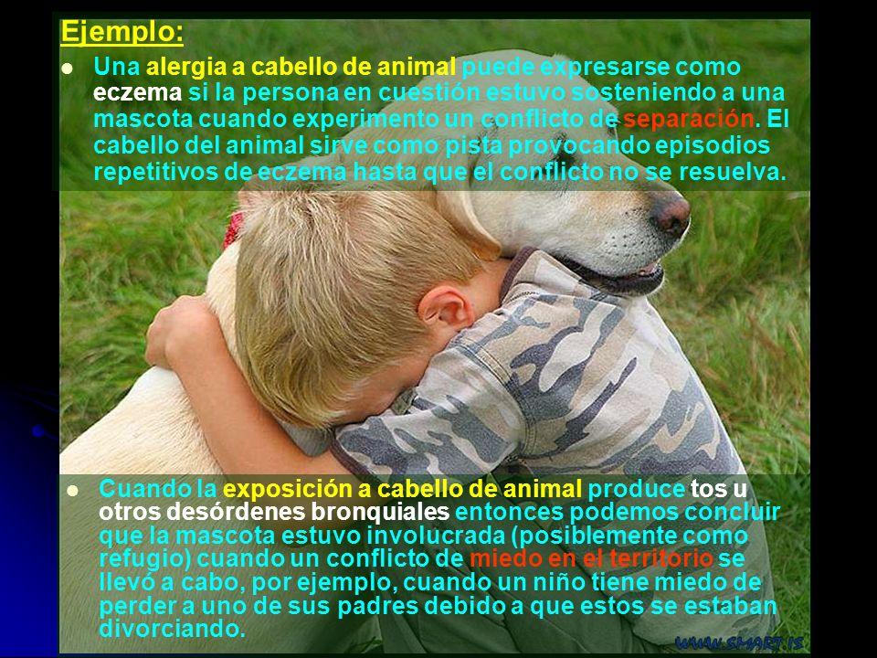 Cuando la exposición a cabello de animal produce tos u otros desórdenes bronquiales entonces podemos concluir que la mascota estuvo involucrada (posib