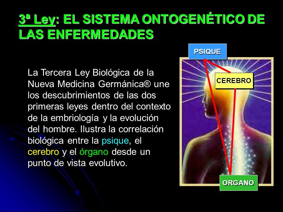3ª Ley: EL SISTEMA ONTOGENÉTICO DE LAS ENFERMEDADES La Tercera Ley Biológica de la Nueva Medicina Germánica® une los descubrimientos de las dos primeras leyes dentro del contexto de la embriología y la evolución del hombre.