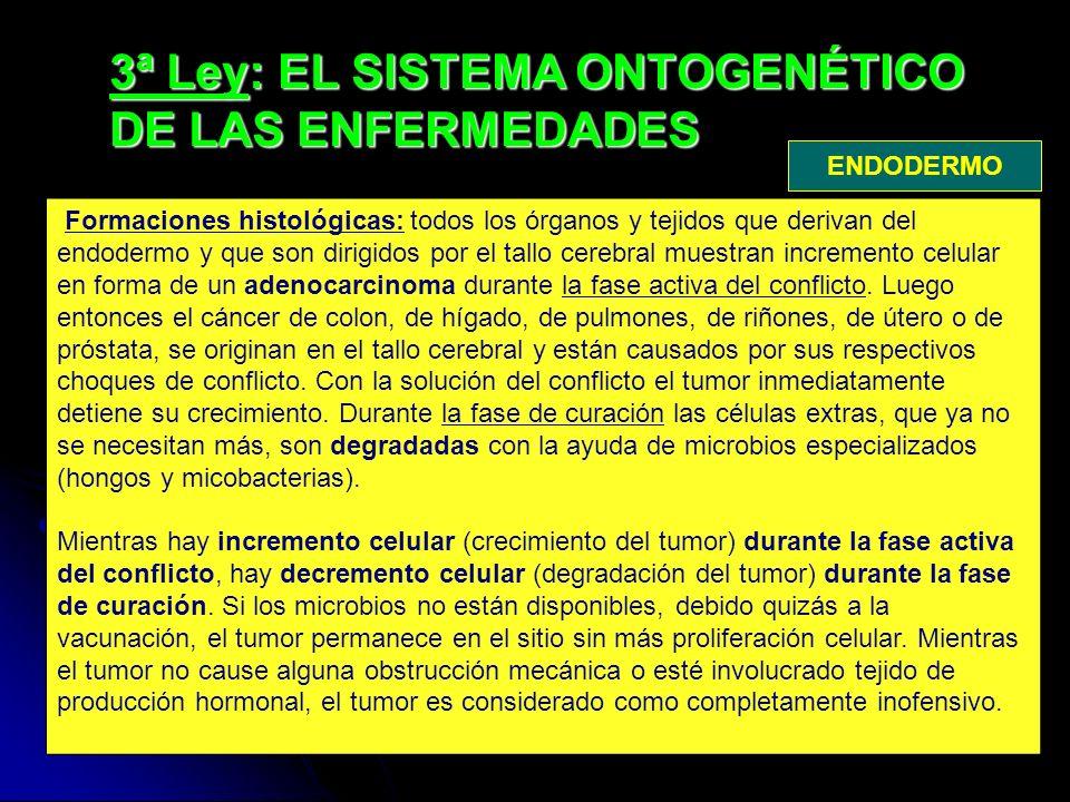 3ª Ley: EL SISTEMA ONTOGENÉTICO DE LAS ENFERMEDADES Formaciones histológicas: todos los órganos y tejidos que derivan del endodermo y que son dirigidos por el tallo cerebral muestran incremento celular en forma de un adenocarcinoma durante la fase activa del conflicto.